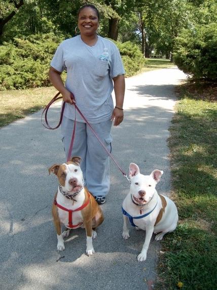 City Dogs pit bulls