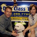 dog_class_tv_photo