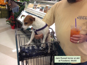 Yes, your dog needn't have a service dog vest to accompany grocery shopping