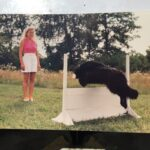 Flat Coated Retriever training