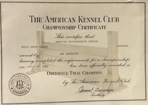 Am Staffordshire CH OTCH, Certificate