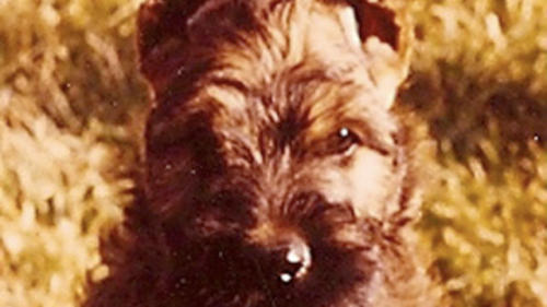 Weaselle as a Pup