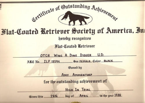 Flat Coated Retriever HIT Certificate